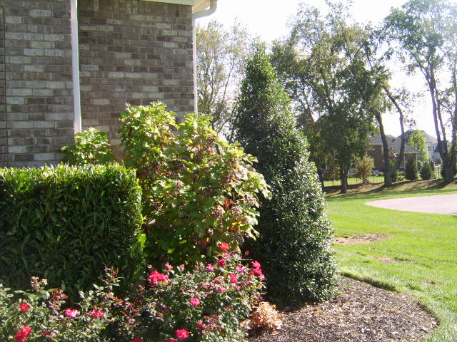 front yard landscaping. Tn Landscaping Front yard
